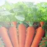 Manfaat Sayuran untuk kesehatan kulit