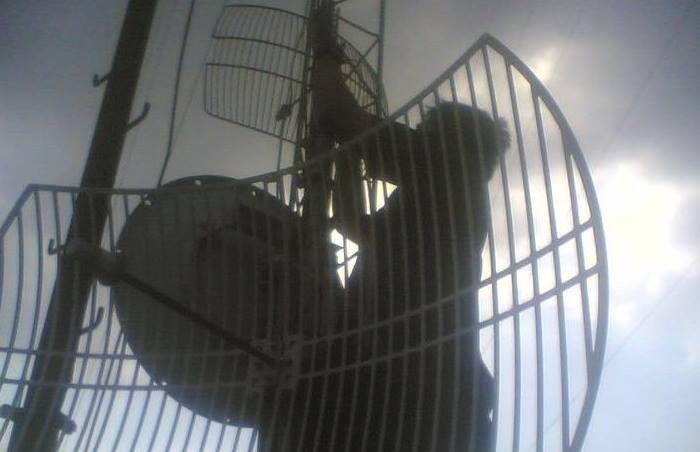 gambar pasang antena