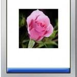 Jurnal TI ~ Sistem Pakar Untuk Identifikasi Bunga yang Bermanfaat Bagi Kesehatan