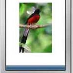 Jurnal TI ~ Sistem Pakar Untuk Mengidentifikasi Jenis-Jenis Burung Kicau