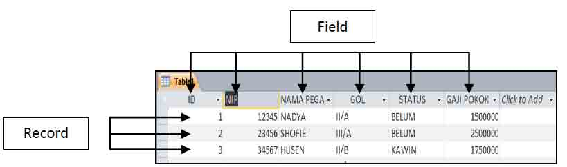 perbedaan field dan record